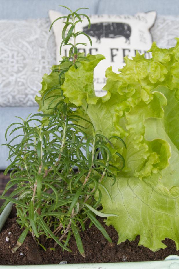 Tractor Supply Farmhouse Porch Finds, Log Home Porch, Farmhouse Pillows, Planting Edibles As Decor, Lettuce and Herbs