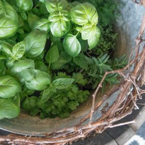 Herbs | Repel Rabbit & Deer From the Garden
