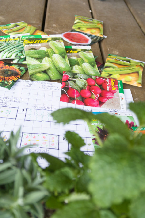 Vegetable Garden Plan and Direct Sew Seeds