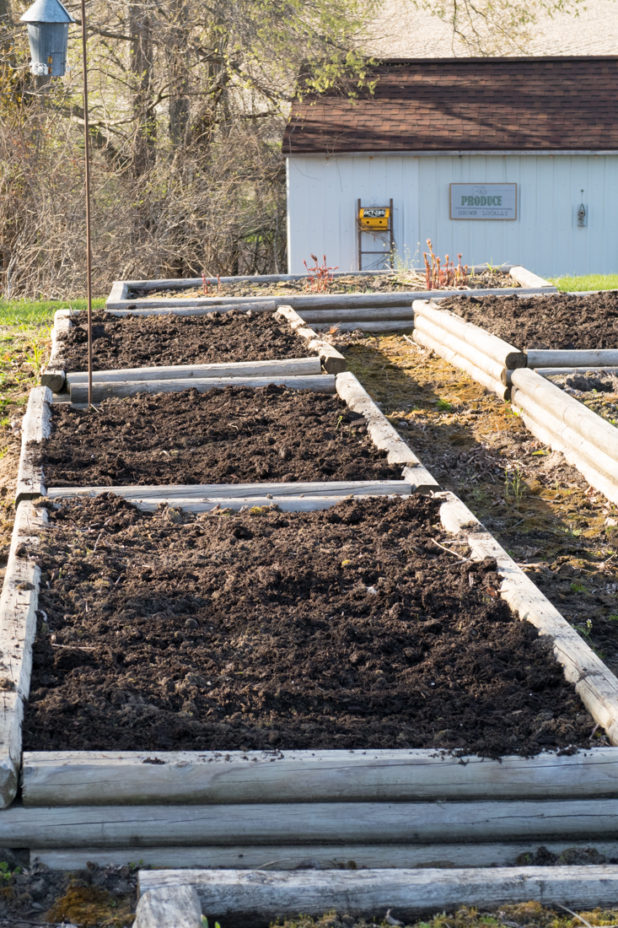 Raised Garden Beds With Fresh Manure and Compost Added