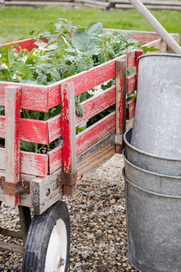 Vegetable Garden Plant Starters, Red Wagon, Galvanized Sap Buckets. My Seed and Plant Starter Guide
