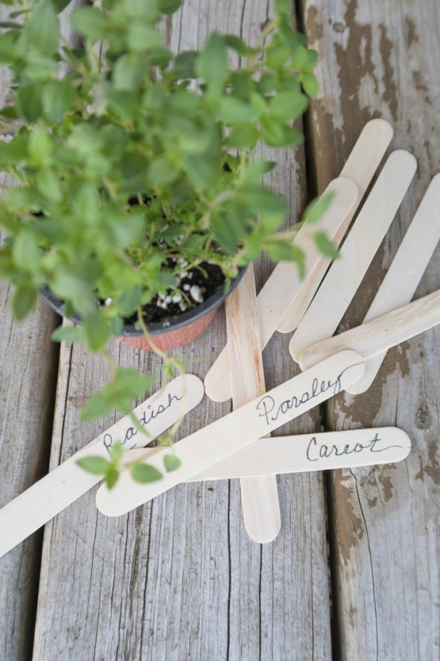 Dollar Store Garden Hacks | Craft Sticks as Garden Markers