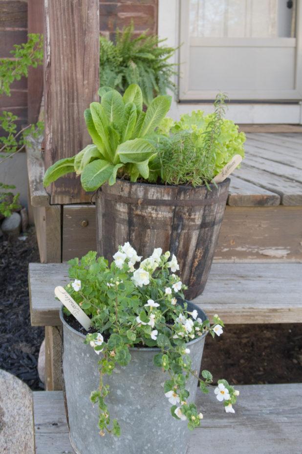 Spring Porch Step, Log Home, Galvanized Bucket, Wooden Bucket, Ferns, Flowers, Herbs, Vegetables