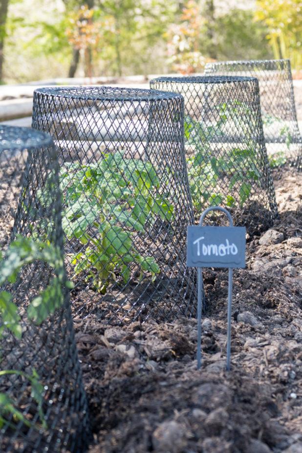 Dollar Store Garden Hacks