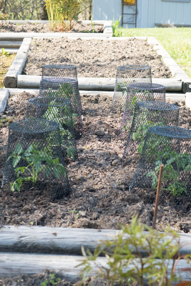 Raised Bed Garden, Tomato Plants, Dollar Store Wire Trash Cans as Cloches, Ikea Plant Markers