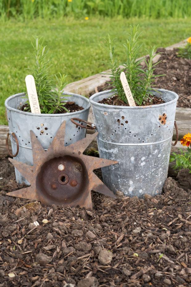 Garden Junk, Galvanized Bucket, Tiller Blade, Rosemary