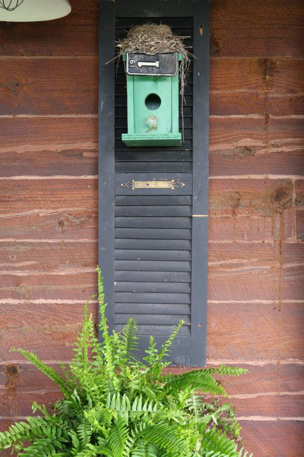 Robins Nest, Birdhouse, Boston Fern, Shutter, Log Home