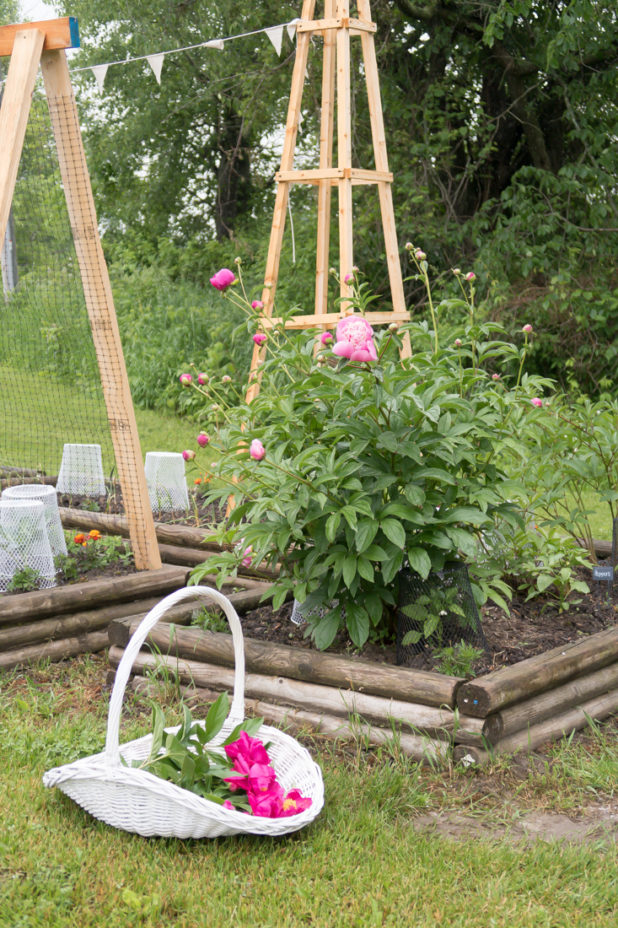 Peonies, Vegetable Garden, Trellis, Raised Garden Bed