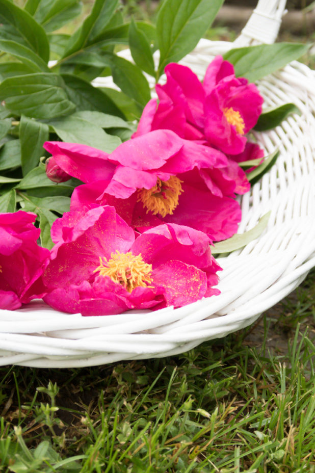 Peonies & Gathering Basket