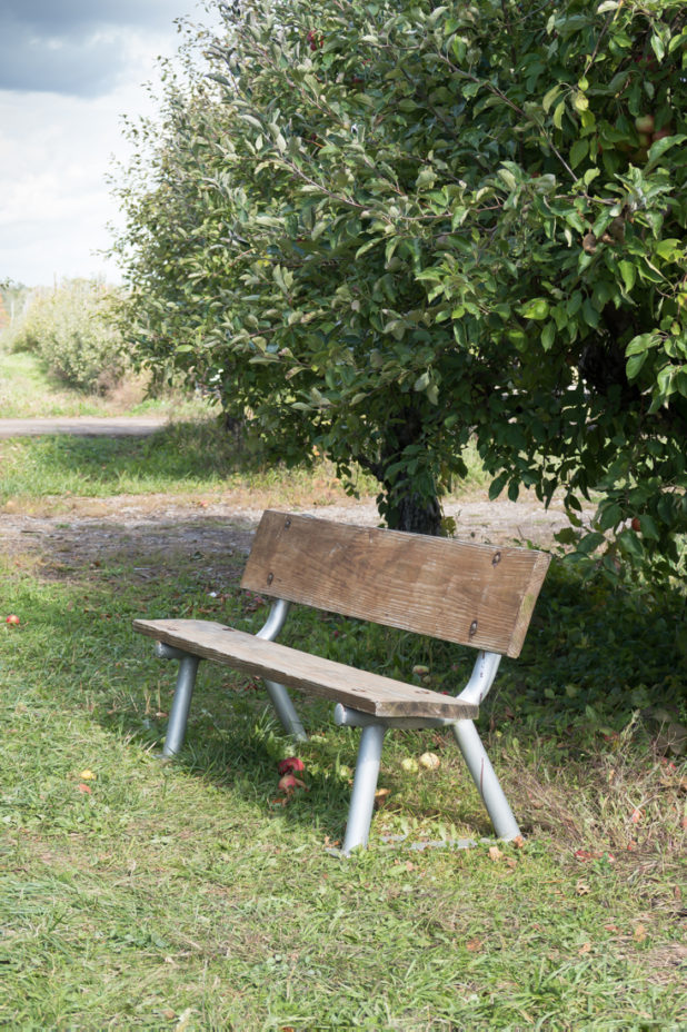 Old Bench, Apple Orchard