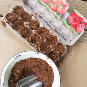 How To Start Seeds In Egg Shells