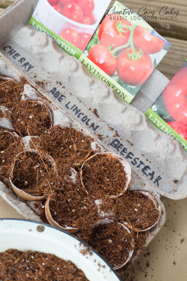 Starting Vegetable Seeds Indoors Using Egg Shells, Tomato Seeds