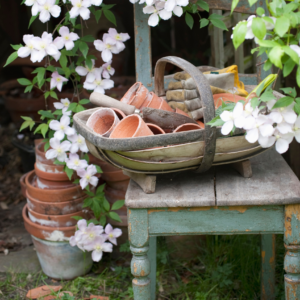 8 Things You'll Want to Add To Your Garden This Season