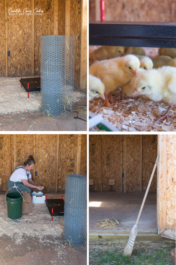 Meat Chicken Coop Set Up
