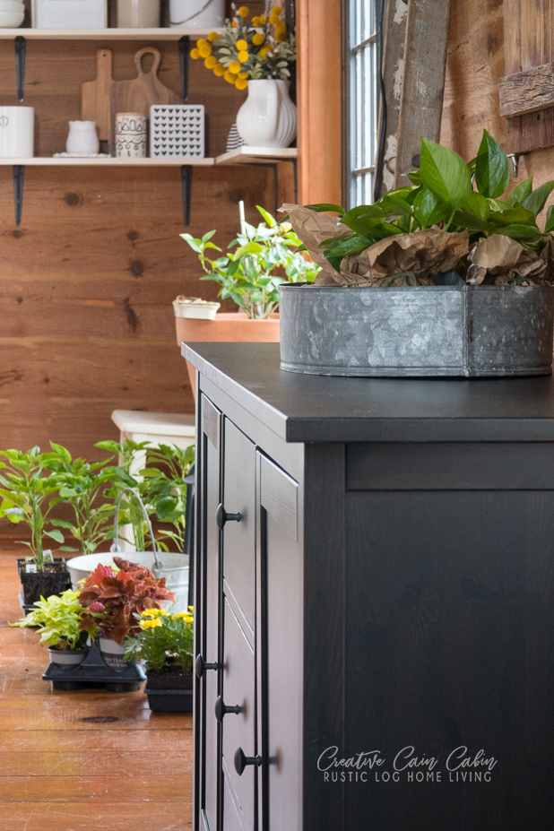 Protecting Plants From Frost By Bring Them Inside