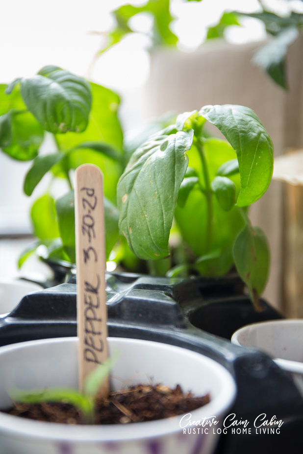 Protecting Plant Flats From Frost, Vegetable Plants, Herbs, and Flowers