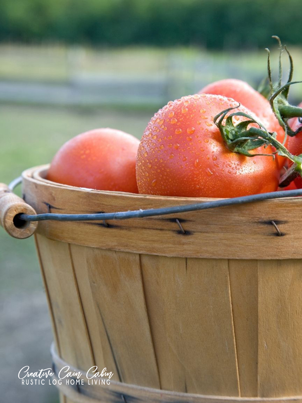 Bushel of Tomatoes