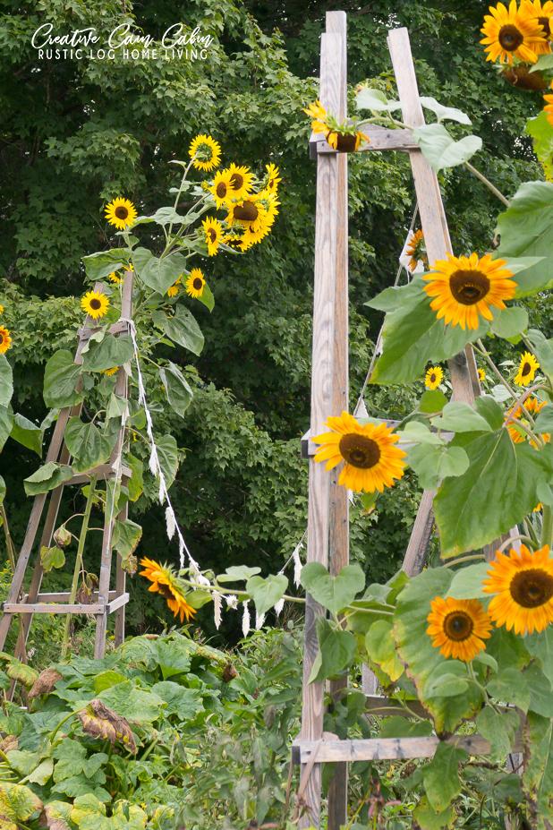 Sunflower, Garden, Fall, Garden Obelisk, Garden Bunting