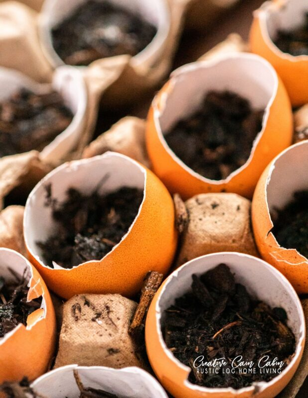 Starting Seeds Indoors In Egg Shells and Egg Cartons