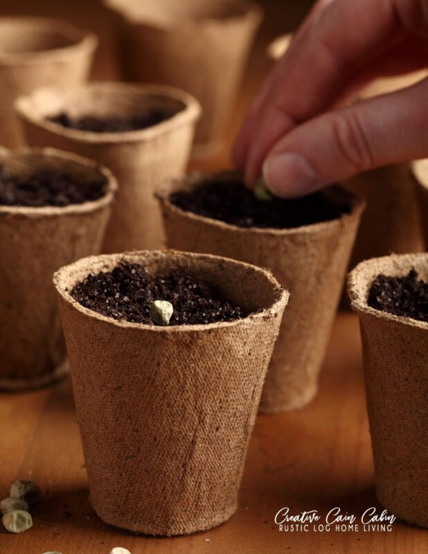 Starting Seeds Indoors In Egg Shells, Egg Cartons, and Jiffy Pots