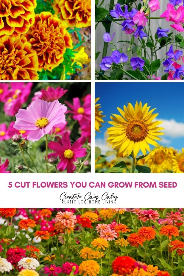 5 Cut Flowers You Can Grow From Seed