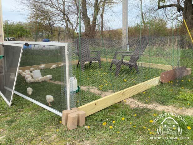 Temporary Chicken Run Build