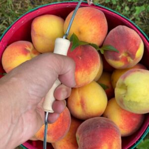 A Day At The Orchard: Apple and Peach Picking