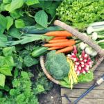 How To Preserve Garden Vegetables